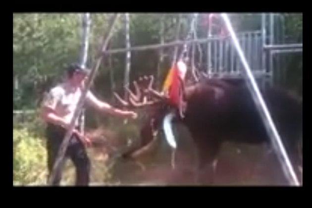 Man Saves Moose