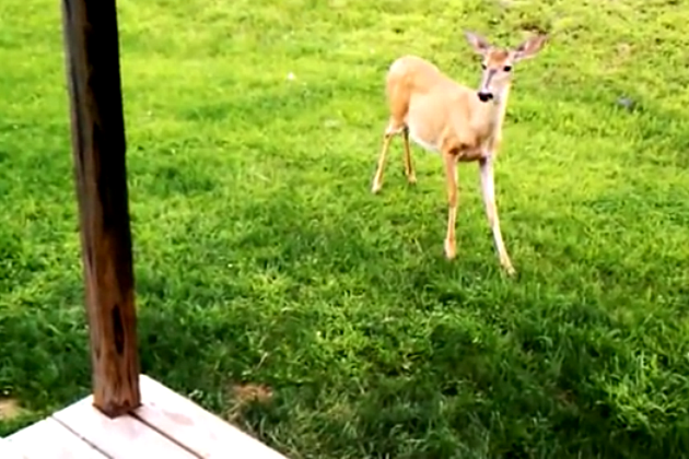 This Might be the Sweetest Animal Video Ever