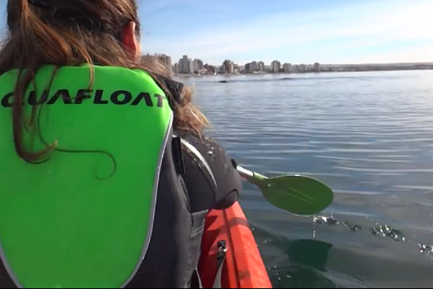 What to do if a Whale Picks you up While Kayaking